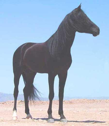 HALIM EL MOKHTAR2