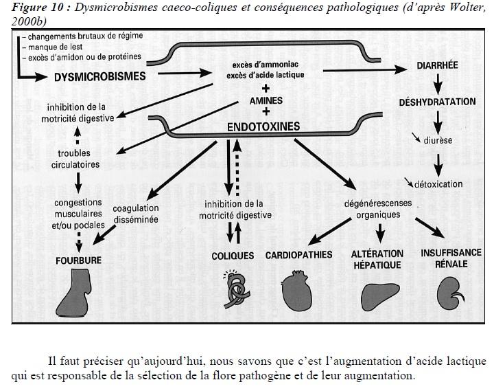 dysmicrobisme