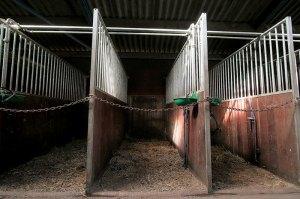 empty_horse_stalls_800