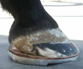 pieds pourrits2