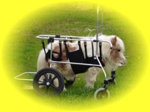 soins paliatifs