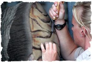 elephant-pedicure-8-framed