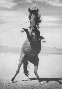 horse77