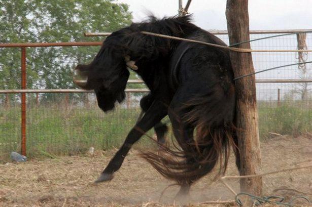 A wild horse in the Danube Delta in Romania having its neck broken-1679820