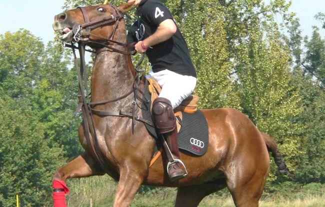 polo-horse-650x414