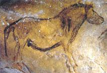 Prjevalski (1)