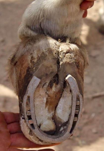 pieds pourrits5