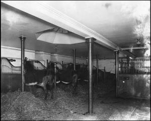 stalles 2