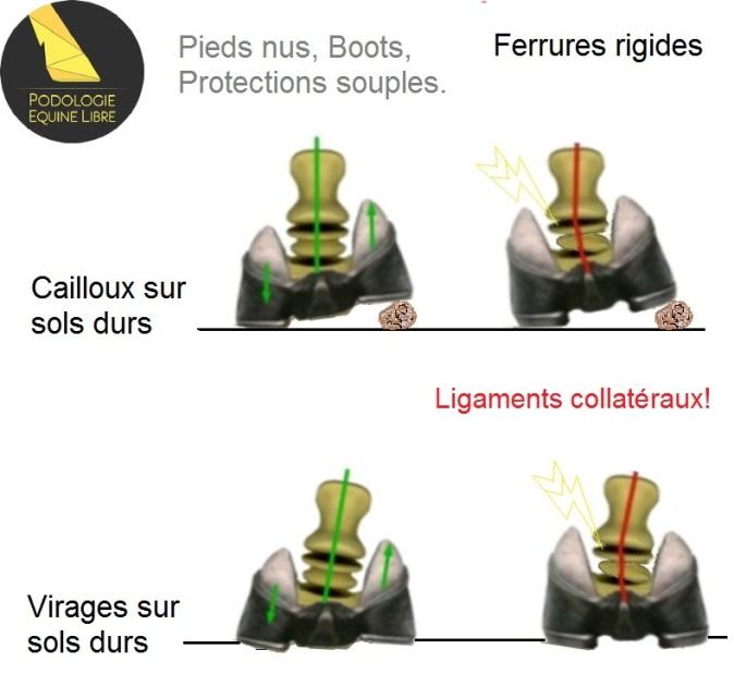 hoof-flex-comparison-graphics