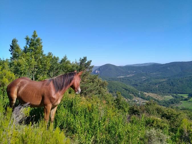 cheval samuel
